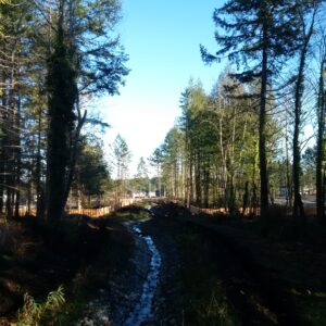 New stream in South Harewood