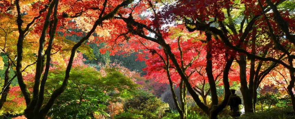 Autumn-PR13AUJG5924
